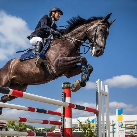 Horse and rider at show jumping competition.